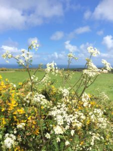 Cornwall Flower Scape