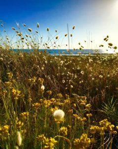 Meadowlands Inspiration